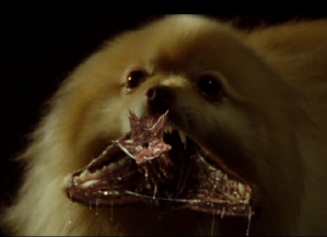This is why we DON'T mess with Pomeranians!!!  (movie still from Blade: Trinity)